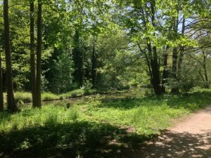 Walking in a park during a go-along (c) Edda Heyken